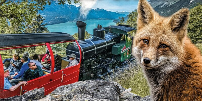layout_social_media_fuchs_quer_saison2020_rz_v2_red